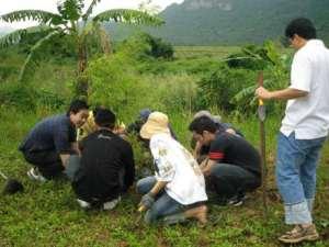 planting-bamboo