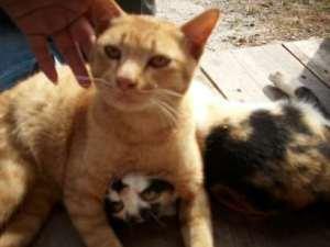 two-kitties