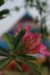 beau flower