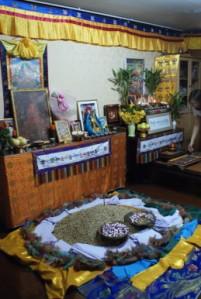 sacred rice