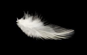birds-feathers-s600x600